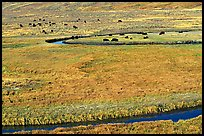 Yellowstone River, meadow, and bisons in Heyden Valley. Yellowstone National Park, Wyoming, USA.