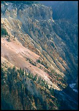 Slopes of Grand Canyon of the Yellowstone. Yellowstone National Park, Wyoming, USA. (color)