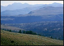 Absaroka Range from Dunraven Pass, early morning. Yellowstone National Park ( color)
