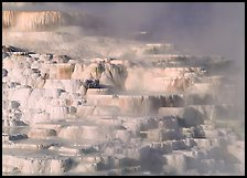 Minerva travertine terraces, Mammoth Hot Springs. Yellowstone National Park, Wyoming, USA. (color)