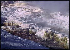 Minerva travertine terraces and steam, Mammoth Hot Springs. Yellowstone National Park, Wyoming, USA. (color)