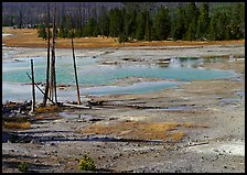 Dead trees and turquoise pond in Norris Geyser Basin. Yellowstone National Park, Wyoming, USA.