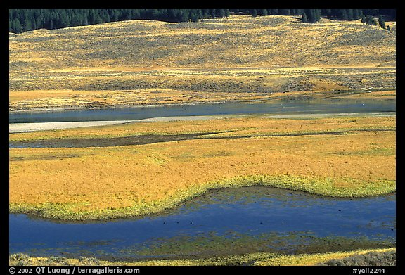 Yellowstone River and meadow in fall. Yellowstone National Park (color)