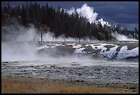 Fumeroles and forest in Upper Geyser Basin. Yellowstone National Park, Wyoming, USA. (color)