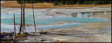 Thermal pond and dead trees. Yellowstone National Park (Panoramic color)