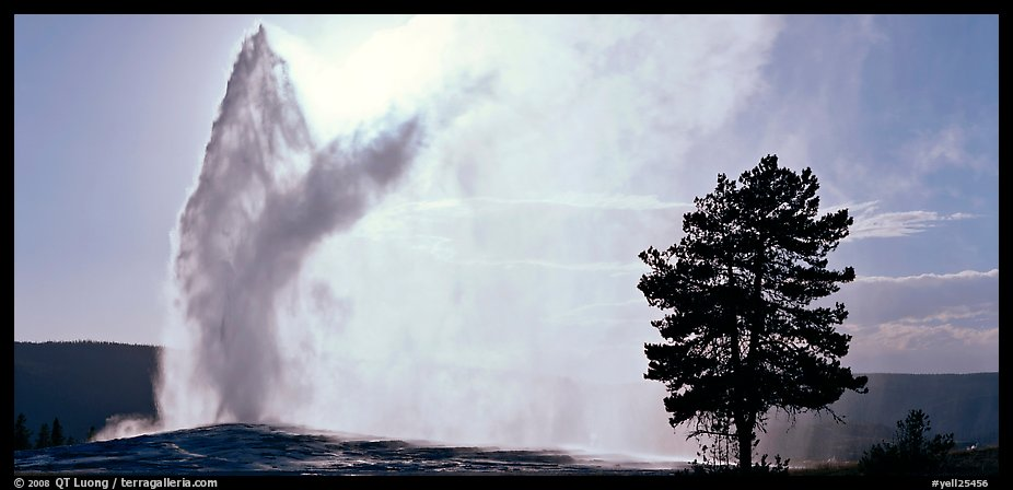 Old Faithful geyser and tree. Yellowstone National Park (color)