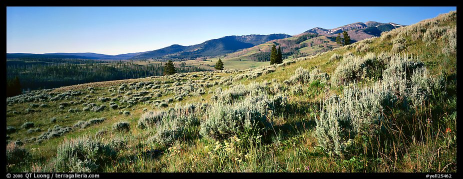 Gentle slopes covered with summer wildflower. Yellowstone National Park (color)