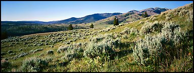 Gentle slopes covered with summer wildflower. Yellowstone National Park (Panoramic color)