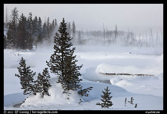 Snow-covered West Thumb thermal basin. Yellowstone National Park (color)