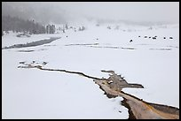 Winter landscape with thermal run-off. Yellowstone National Park, Wyoming, USA.