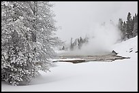 Snowy landscape with distant thermal pool. Yellowstone National Park, Wyoming, USA.