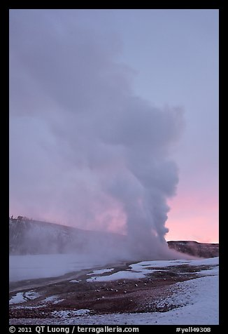 Old Faithful Geyser, daww eruption. Yellowstone National Park, Wyoming, USA.
