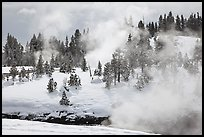 Steam and forest in winter. Yellowstone National Park, Wyoming, USA.