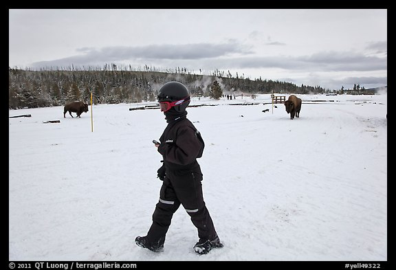 Child walking with buffaloes in the distance. Yellowstone National Park (color)