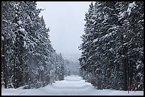 Snow-covered road. Yellowstone National Park ( color)