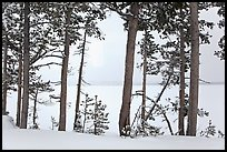 Trees on edge of Lewis Lake in winter. Yellowstone National Park, Wyoming, USA.