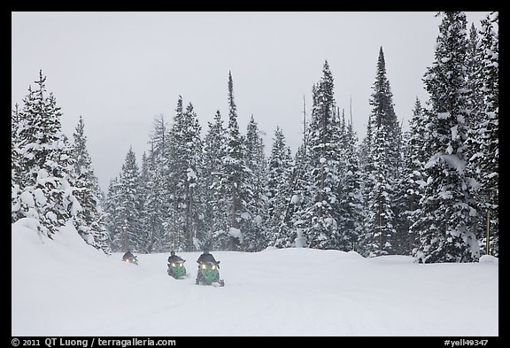 Snowmobiling on snowy day. Yellowstone National Park (color)