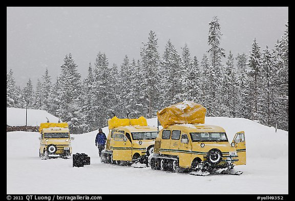 Snowcoaches and snow falling. Yellowstone National Park, Wyoming, USA.