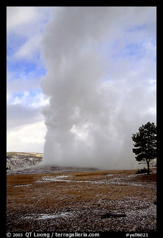 Steam column from Old Faithful Geyser. Yellowstone National Park, Wyoming, USA.
