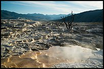 Pool, travertine terraces, and dead trees, Mammoth Hot Springs. Yellowstone National Park ( color)