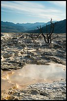 Main Terrace, Mammoth Hot Springs, morning. Yellowstone National Park ( color)