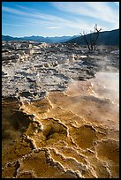 Main Terrace, morning, Mammoth Hot Springs. Yellowstone National Park ( color)
