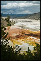 Main Terrace, afternoon, Mammoth Hot Springs. Yellowstone National Park ( color)