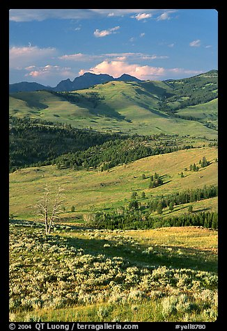 Hills from Specimen ridge, late afternoon. Yellowstone National Park (color)