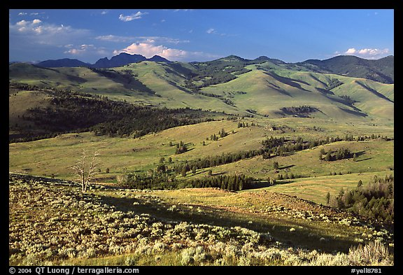 Bushes and rolling Hills in summer, Specimen ridge. Yellowstone National Park (color)