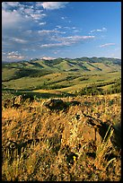Rocks, grasses, and hills, Specimen ridge, late afternoon. Yellowstone National Park, Wyoming, USA.