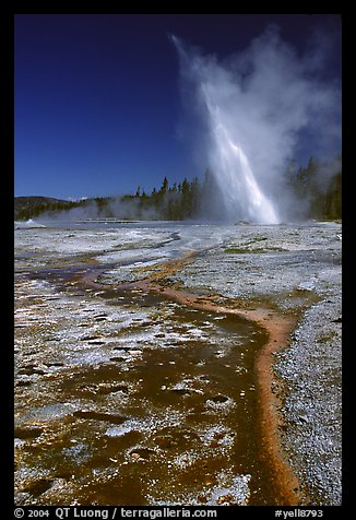 Daisy Geyser erupting at an angle. Yellowstone National Park (color)