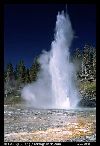 Grand Geyser,  tallest of the regularly erupting geysers in the Park. Yellowstone National Park (color)