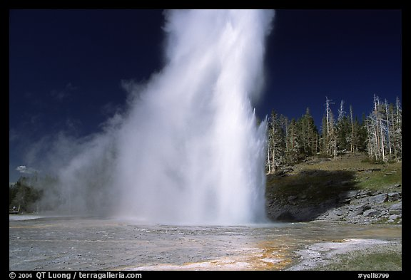 Grand Geyser eruption, afternoon. Yellowstone National Park, Wyoming, USA.