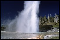 Grand Geyser eruption, afternoon. Yellowstone National Park, Wyoming, USA. (color)