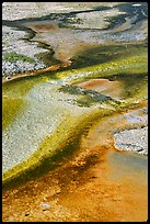 Detail of colorful algaes, Biscuit Basin. Yellowstone National Park ( color)
