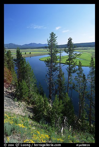 Trees and bend of the Yellowstone River, Hayden Valley. Yellowstone National Park (color)