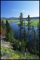 Trees and bend of the Yellowstone River, Hayden Valley. Yellowstone National Park, Wyoming, USA.