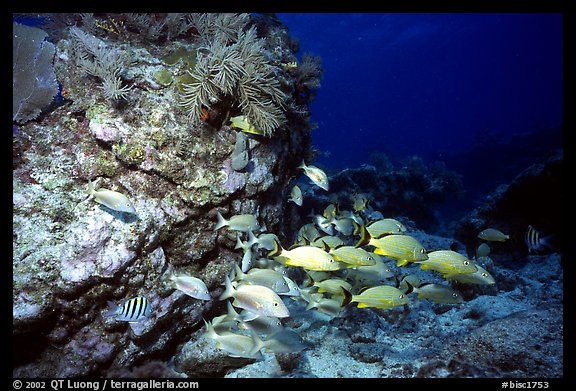 School of fish and rock. Biscayne National Park (color)
