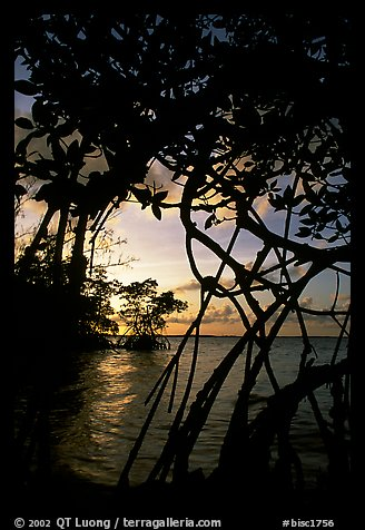 Biscayne Bay viewed through mangal at edge of water, sunset. Biscayne National Park (color)