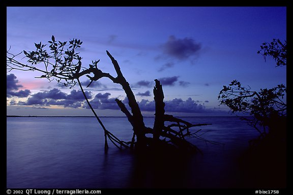 Biscayne Bay viewed through fringe of mangroves, dusk. Biscayne National Park, Florida, USA.
