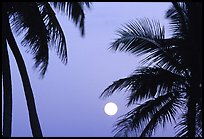Palm trees leaves and moon, Convoy Point. Biscayne National Park, Florida, USA.