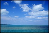 Sky and Elkhorn coral reef. Biscayne National Park ( color)