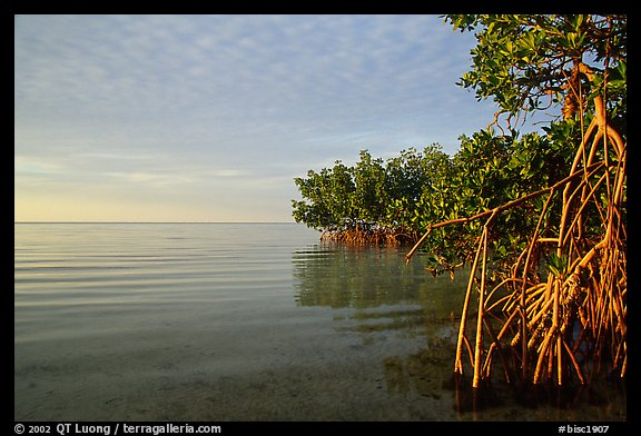 Mangrove shore of Elliott Key, sunset. Biscayne National Park (color)