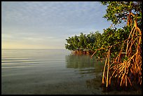 Mangrove shore of Elliott Key, sunset. Biscayne National Park, Florida, USA. (color)