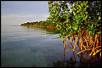 Coastal environment with mangroves,  Elliott Key, sunset. Biscayne National Park, Florida, USA.
