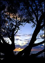 Sunrise framed by tree, Elliott Key. Biscayne National Park, Florida, USA. (color)