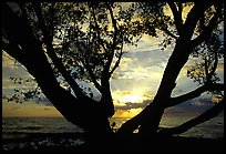 Tree and sunrise over ocean, Elliott Key. Biscayne National Park, Florida, USA. (color)