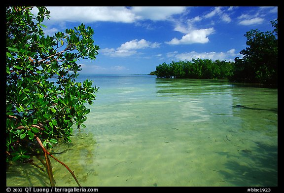 Mangrove forest on fringe of Elliott Key, mid-day. Biscayne National Park (color)