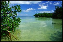 Mangrove forest on fringe of Elliott Key, mid-day. Biscayne National Park, Florida, USA. (color)