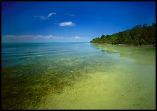 Shoreline and seagrass on Elliott Key near the harbor. Biscayne National Park, Florida, USA.